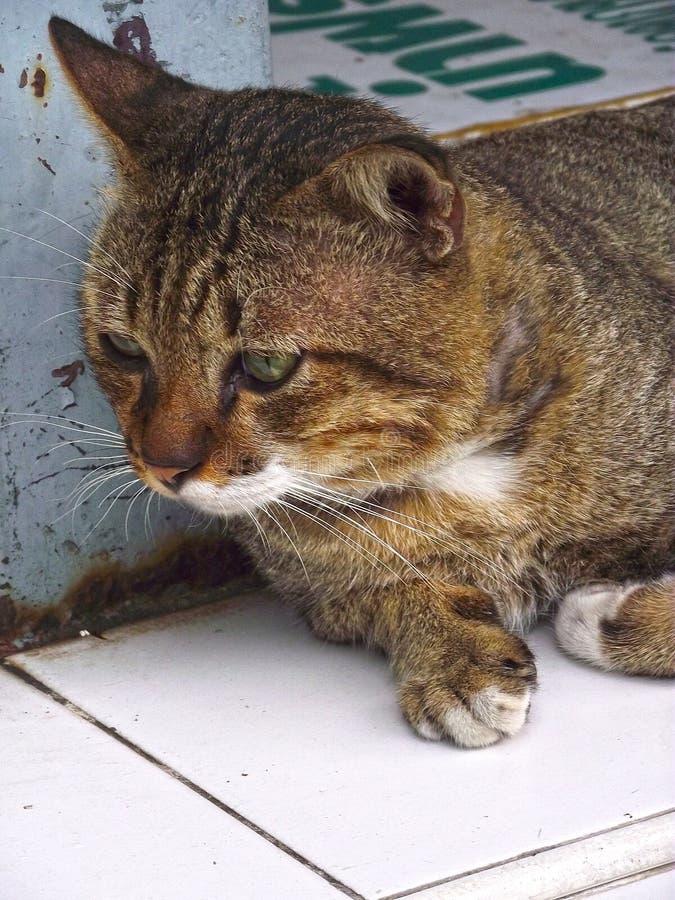 De kat ontspant op de lijst dichtbij huis stock afbeeldingen