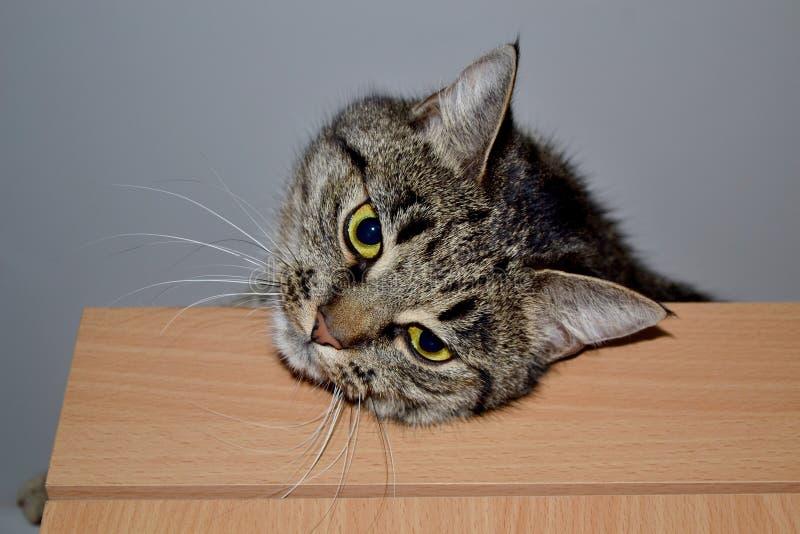 De kat op de kast royalty-vrije stock foto