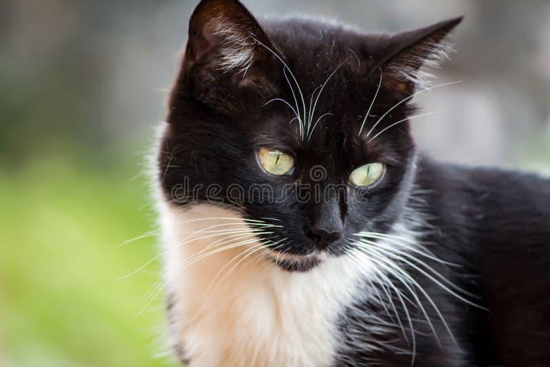 De kat op de horizon royalty-vrije stock foto