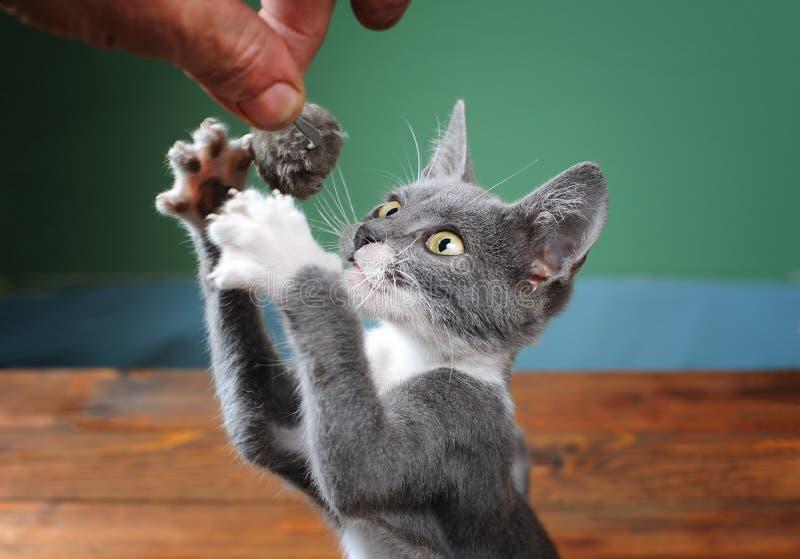 De kat probeert om pluchemuis te vangen stock foto