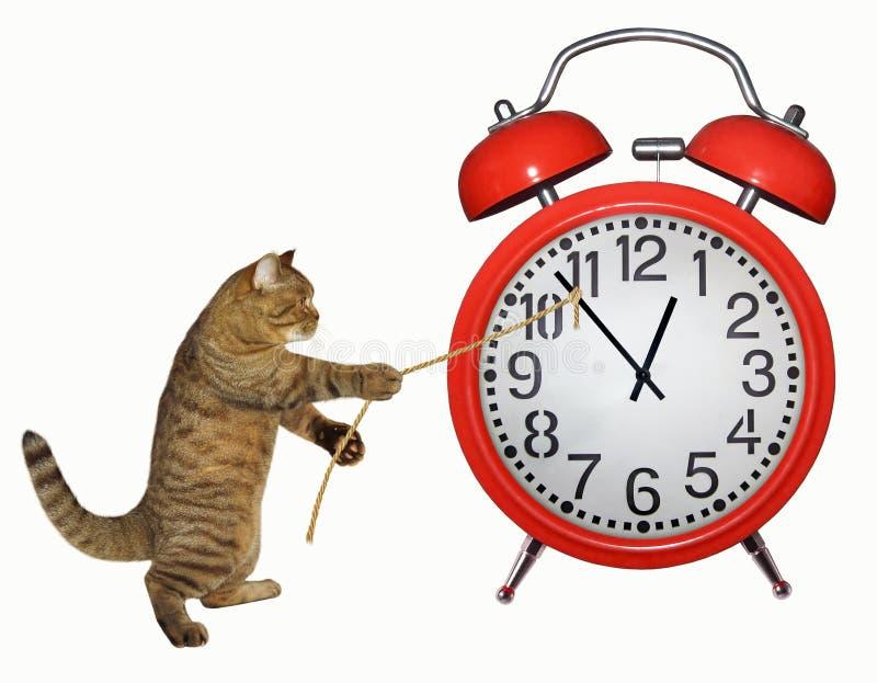 De kat probeert om tijd tegen te houden royalty-vrije stock foto