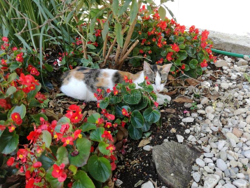 De kat rust aan de bloemen royalty-vrije stock foto