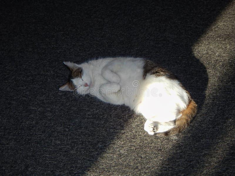 De kat is in slaap stock afbeeldingen