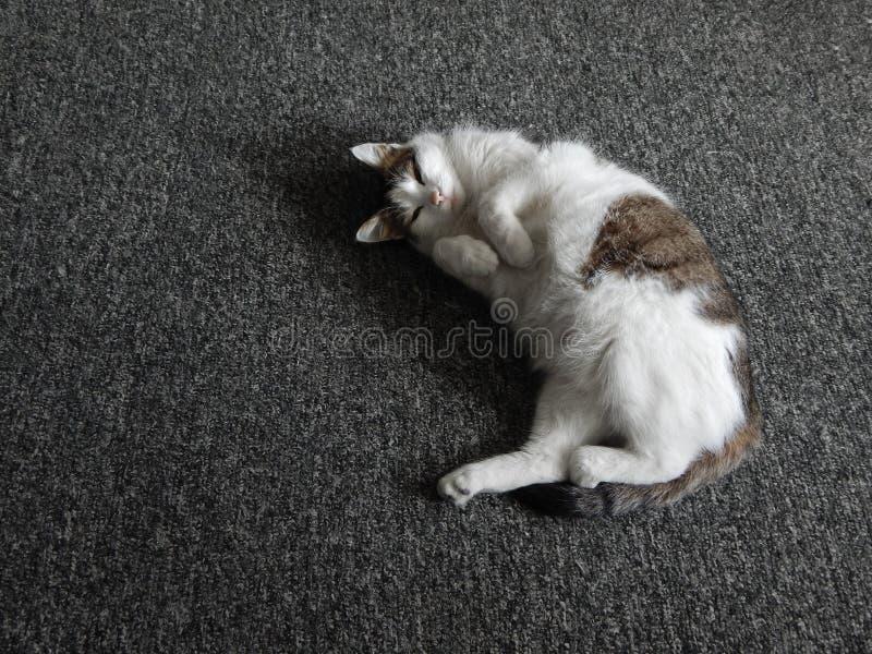 De kat is in slaap stock afbeelding