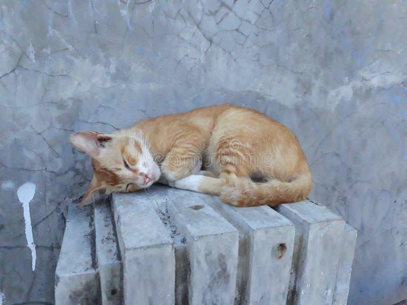 De kat slaapt stock afbeeldingen