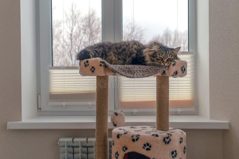 De kat slaapt op een bank tegenover het winterraam Het begrip comfort kattehuis stock foto's