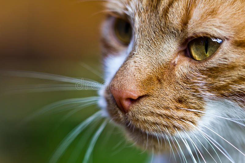 De kat sluit omhoog kleur stock foto's