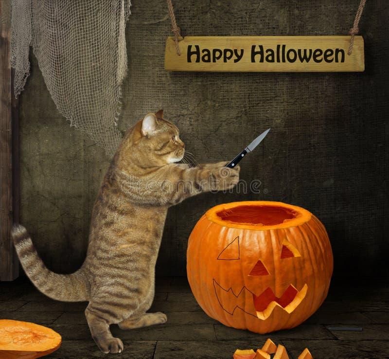 De kat snijdt pompoen voor Halloween 2 royalty-vrije stock foto