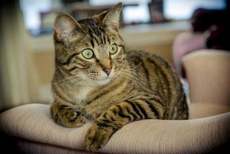 De kat stelt royalty-vrije stock afbeelding