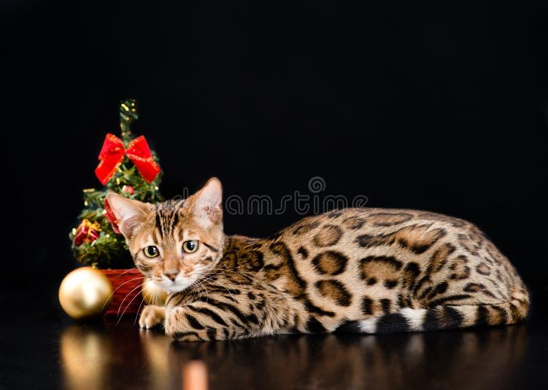 De kat van Bengalen met Kerstmisboom op donkere achtergrond royalty-vrije stock fotografie