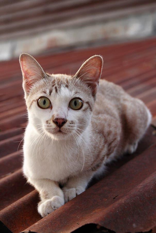 De kat van de baby op het dak stock afbeelding