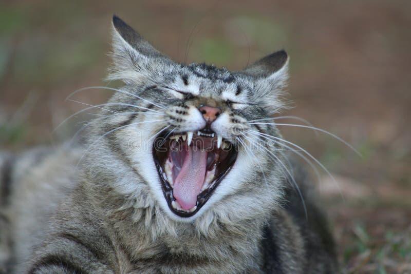 De Kat van de geeuw royalty-vrije stock afbeeldingen