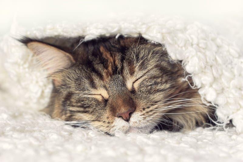 De kat van de gezichtsslaap royalty-vrije stock afbeeldingen