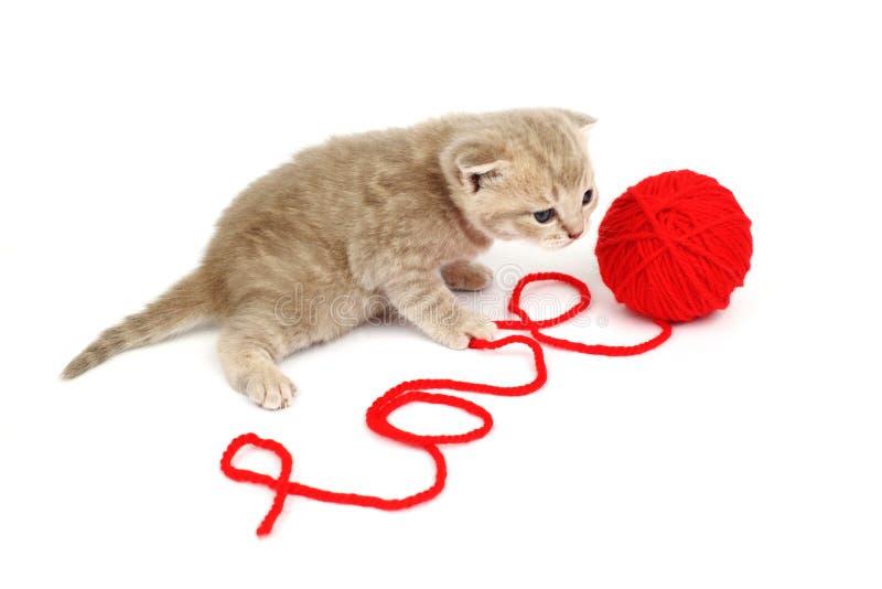 De kat van de liefde royalty-vrije stock afbeeldingen