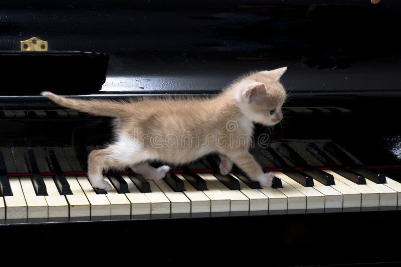 De kat van de piano stock afbeeldingen