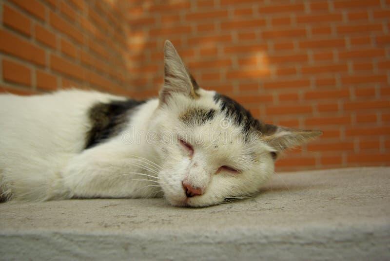 De kat van de slaap stock foto