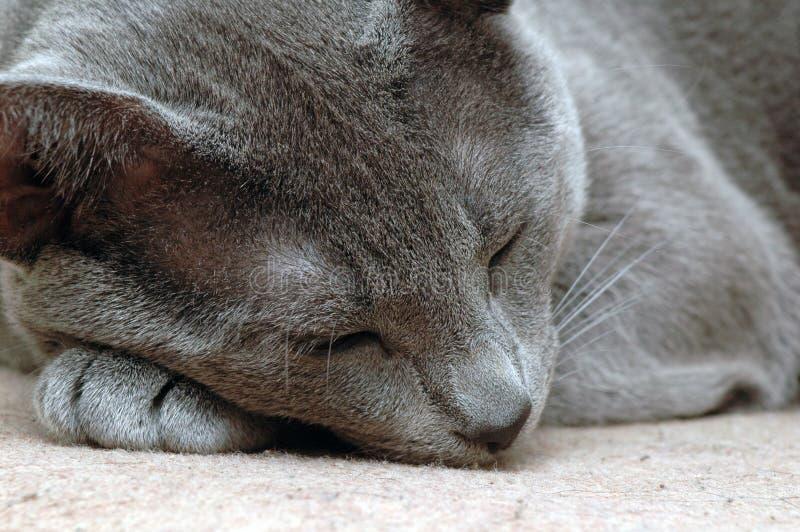 De kat van de slaap royalty-vrije stock fotografie
