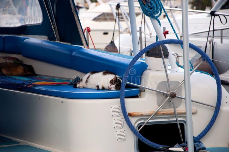 De kat van de slaap op boad stock fotografie