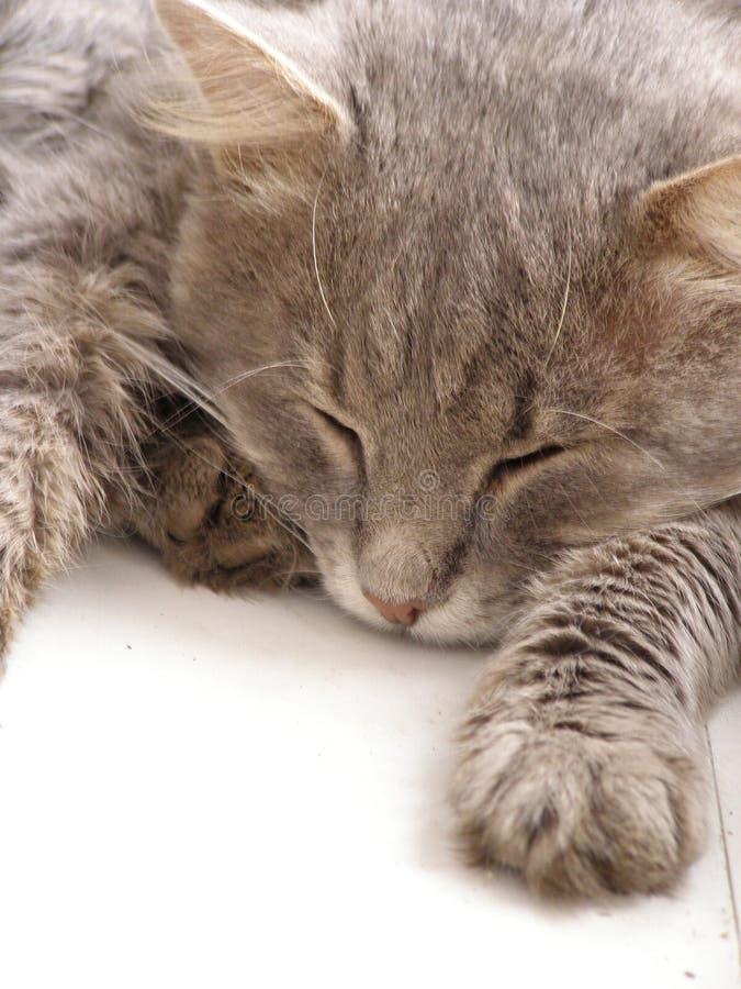 De kat van de slaap op venster stock afbeelding