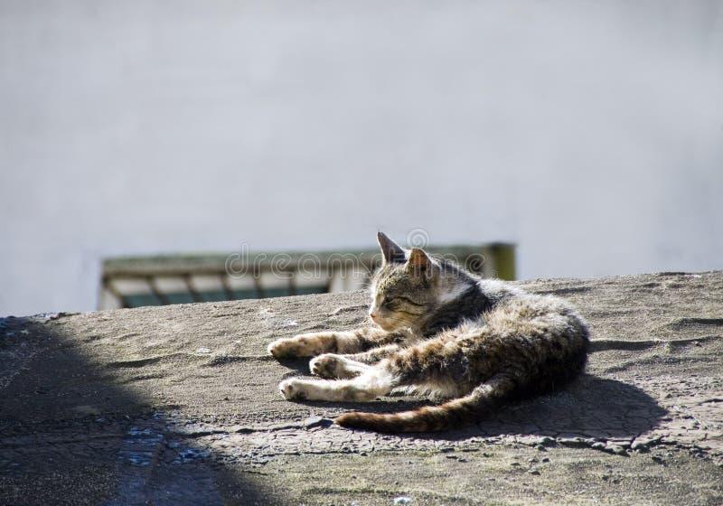 De kat van het dak stock afbeeldingen