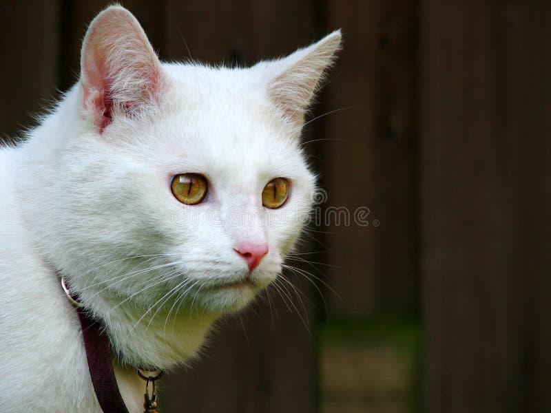 De kat van het landbouwbedrijf royalty-vrije stock afbeeldingen