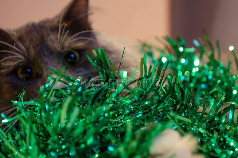 De kat van het nieuwjaar in klatergoud stock fotografie