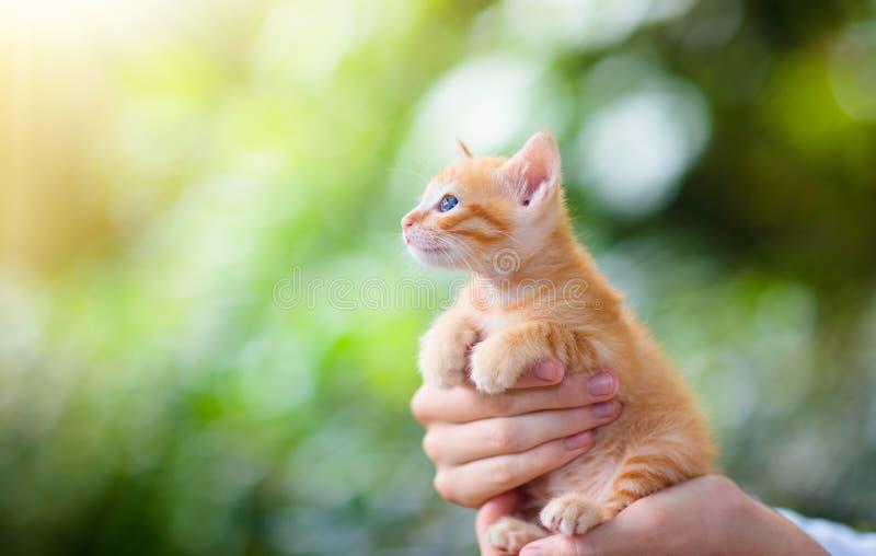 De kat van de mensenholding Babykatje in menselijke handen royalty-vrije stock foto