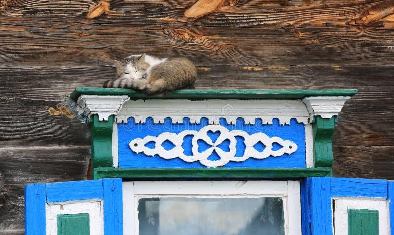 De kat van de slaap op venster stock fotografie