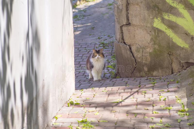 De kat ving een hagedis De wereld van katten Een katje en een hagedis Het katje is een roofdier De jager, jager met prooi stock fotografie