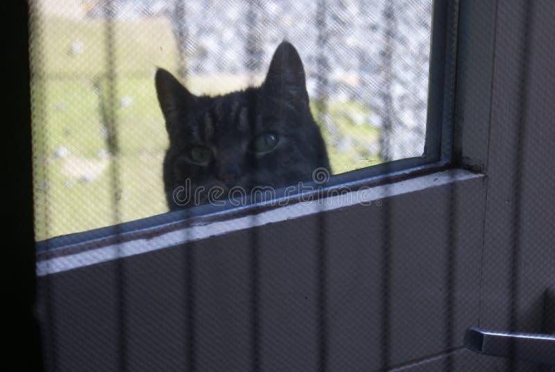 De kat wil in het huis komen royalty-vrije stock afbeeldingen