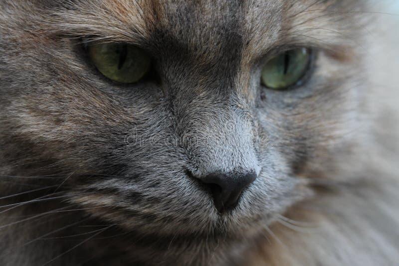 De kat ziet eruit royalty-vrije stock afbeeldingen