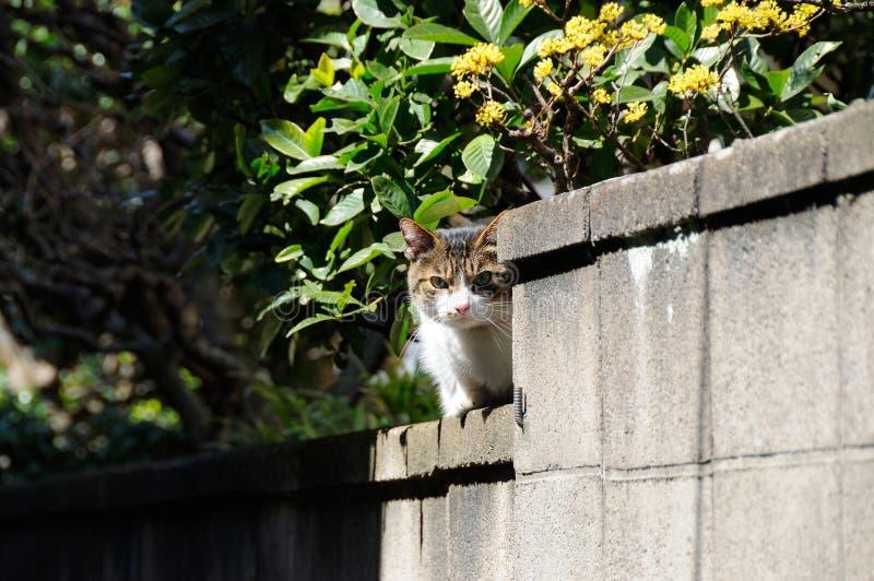 De kat zit bovenop het concrete omheining staren royalty-vrije stock foto