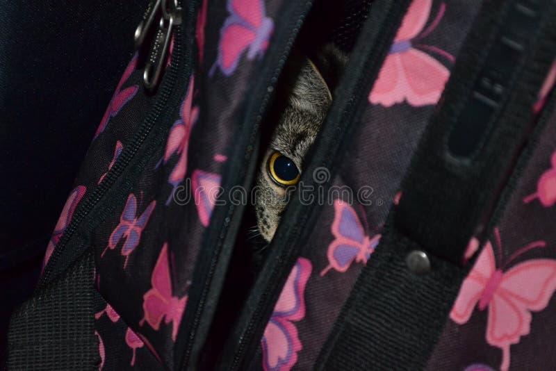 De kat zit in de koffer stock afbeeldingen