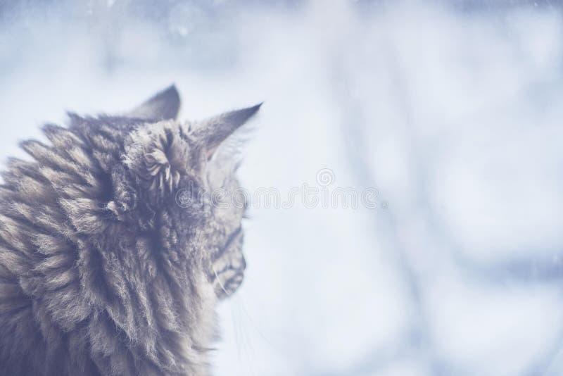 De kat zit door het venster royalty-vrije stock foto