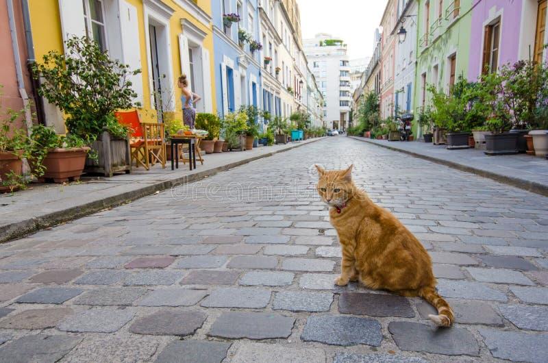 De kat zit in het midden van Rue Cremieux in Parijs royalty-vrije stock foto's