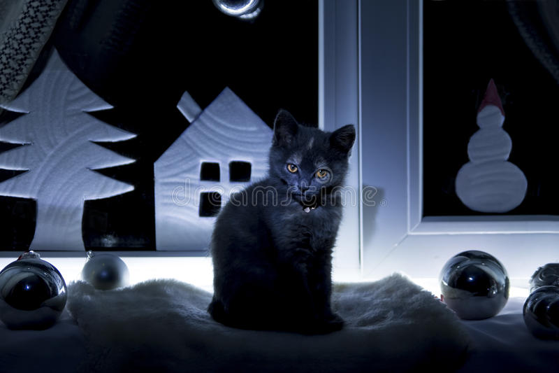 De kat zit in het venster voor Kerstmis stock fotografie