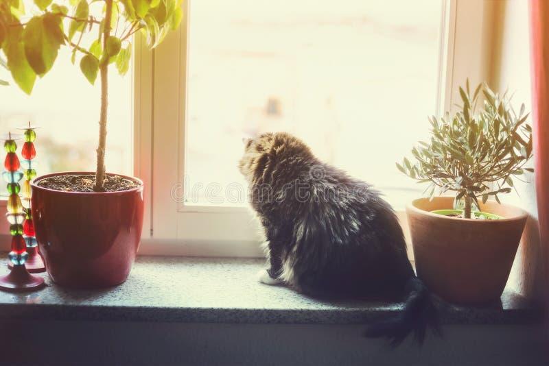 De kat zit op venster vensterbank en buiten het kijken stock foto's