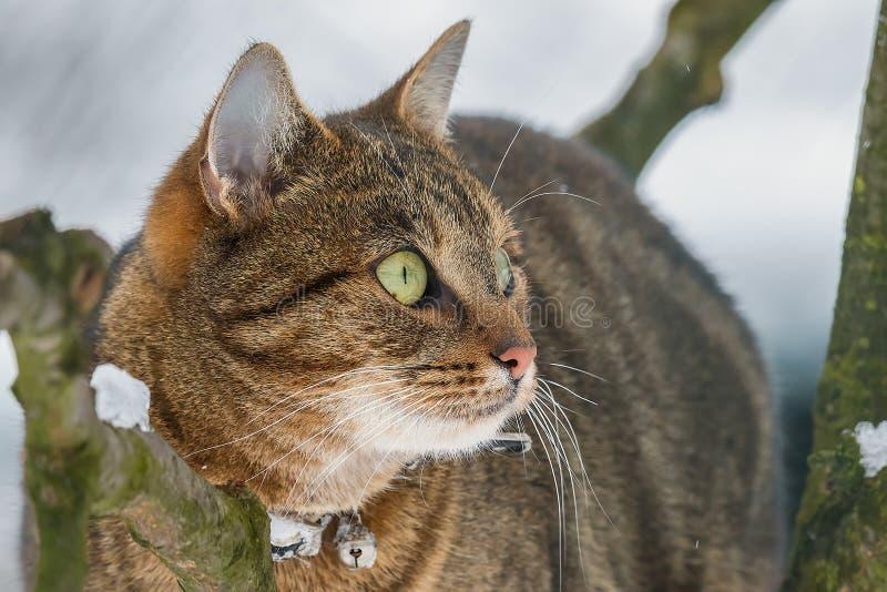 De kat zit in de sneeuw royalty-vrije stock foto