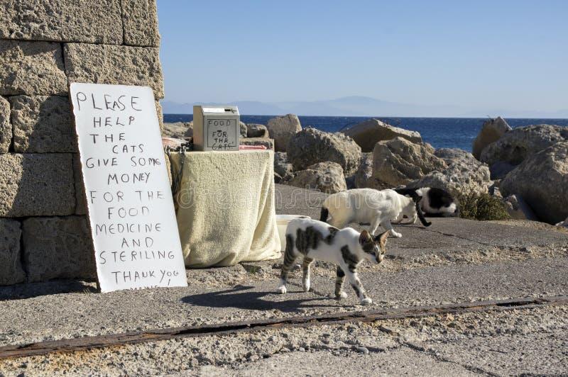 De katten die van Rhodos op solidariteit en voedsel op de kust in stad, overzees op achtergrond wachten stock afbeeldingen