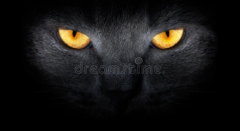 De katten kijken van duisternis stock foto
