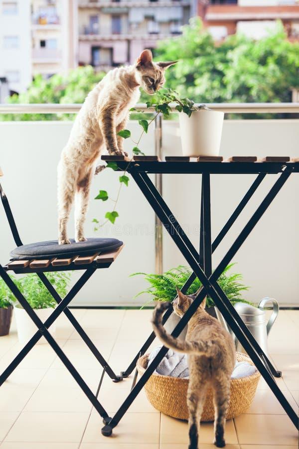 De katten lopen op het balkon royalty-vrije stock afbeelding