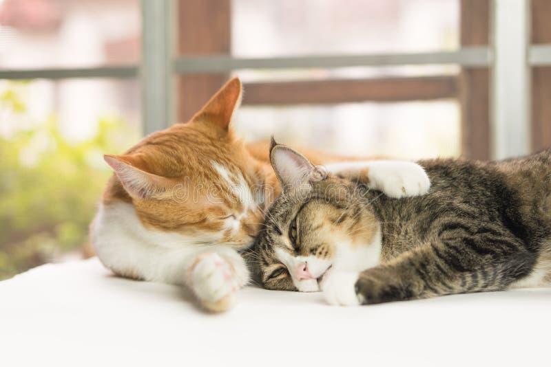 De katten maken het lichaam schoon elke dag royalty-vrije stock afbeelding