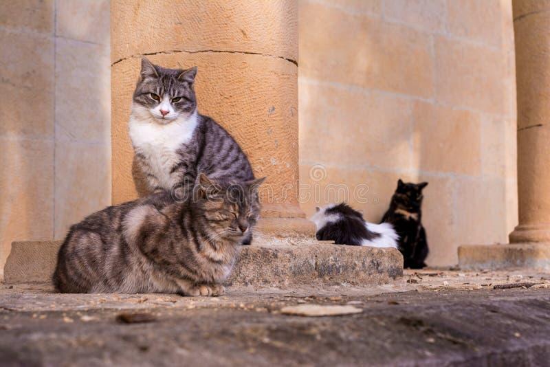 De katten zitten op een steen en vallen in slaap royalty-vrije stock afbeelding