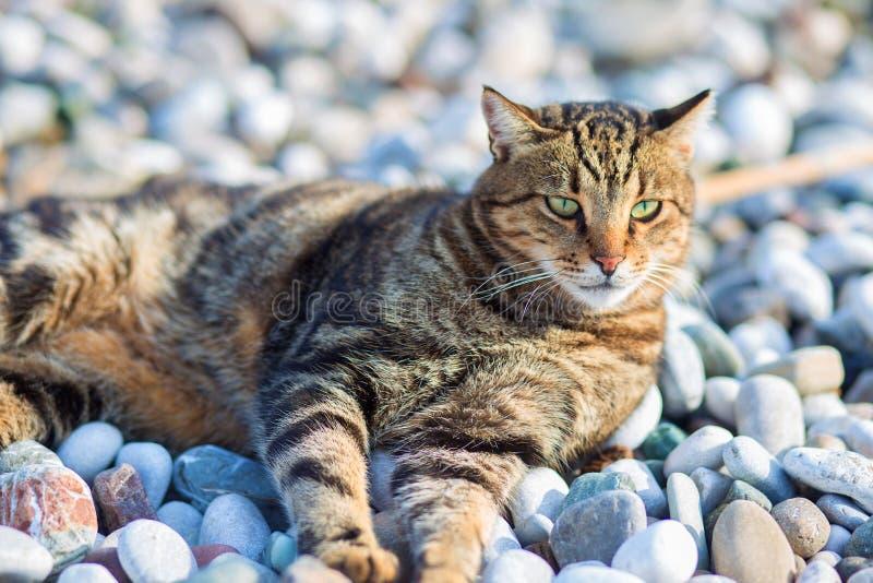 De kattenleugens heeft een rust op het strand op de bank van de Middellandse Zee stock fotografie