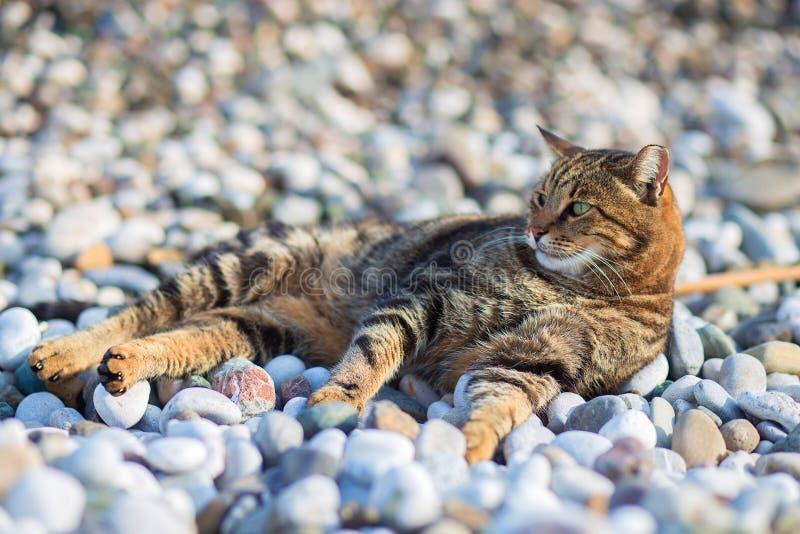 De kattenleugens heeft een rust op het strand op de bank van de Middellandse Zee stock foto