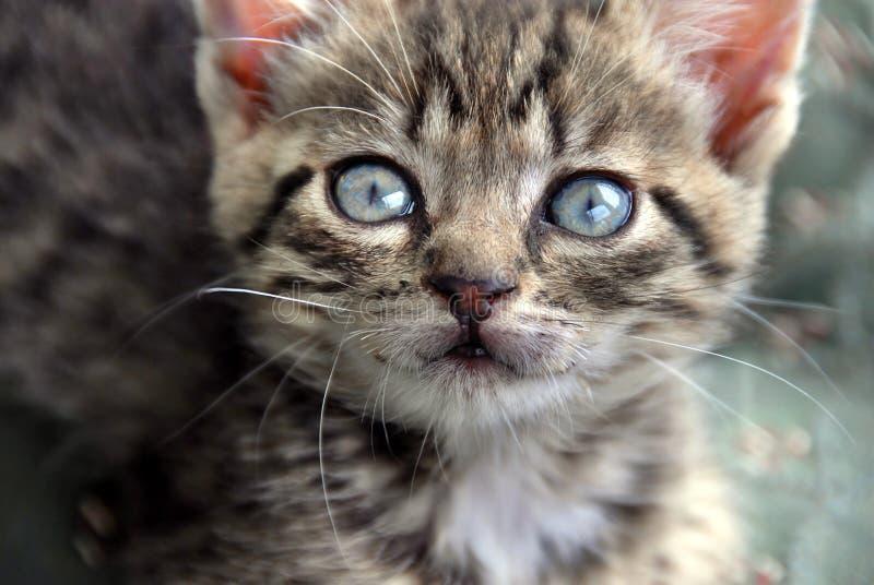 De kattenportret van de baby royalty-vrije stock fotografie