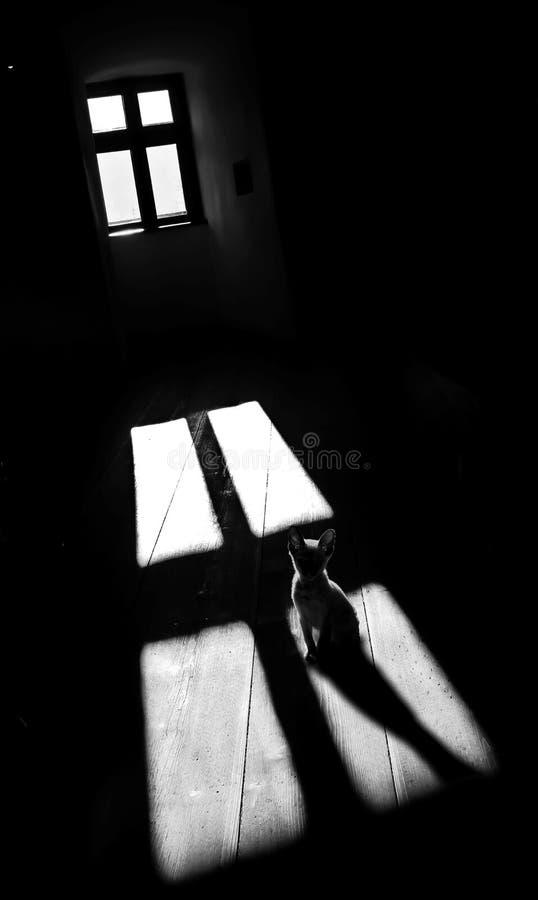 De kattenschaduw achtervolgde het donkere licht van het ruimte witte venster