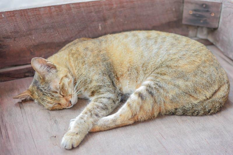 De kattenslaap op het bed royalty-vrije stock fotografie