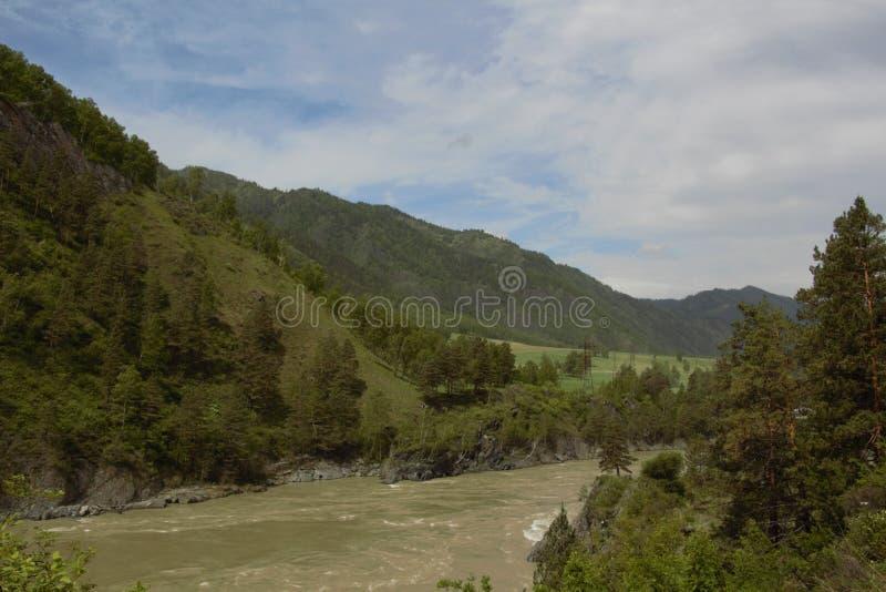 De Katun-rivier in Altai, Chemall stock foto
