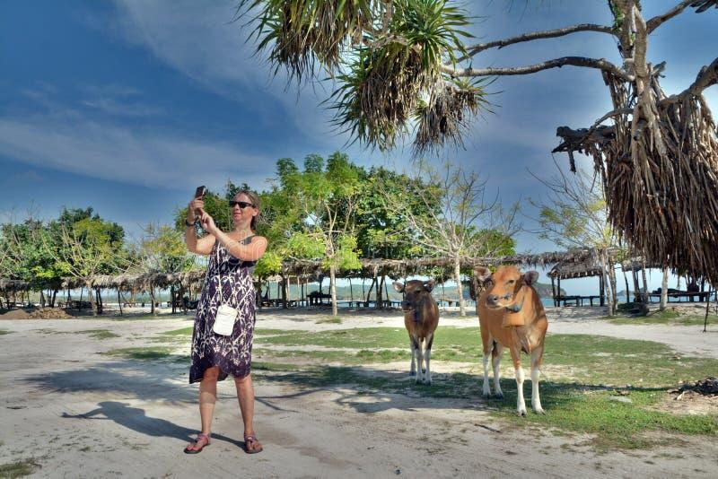 De Kaukasische vrouw neemt selfie met koeien onder de blauwe hemel in Vietnam royalty-vrije stock foto's